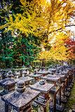Fall Foliage in Nara, Japan