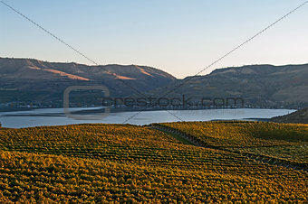 A view of Lake Chelan from the Benson vineyard at sunset