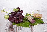 Red wine grape still life.