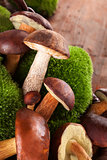 Culinary edible mushrooms.