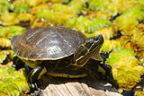 Small turtle on the wood