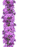 Vertical seamless pattern of flowers phlox.
