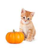 Cute orange kitten with mini pumpkin on white.