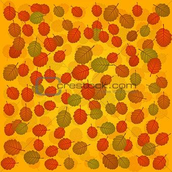 autumn alder background