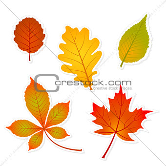 autumn set of leaves stickers