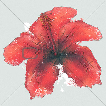 Watercolor red hibiscus