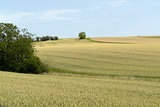 rural pictorial agriculture scenery at summer time