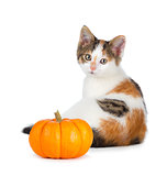 Cute calico kitten with mini pumpkin on white.