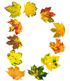 Letter D composed of autumn maple leafs