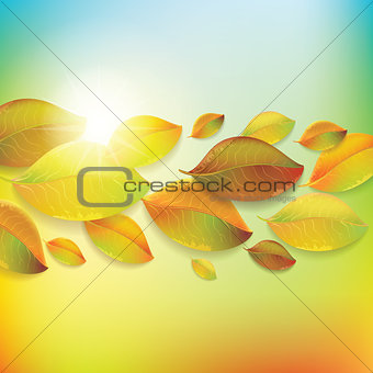 Autumn colorful leaves on colorful background.