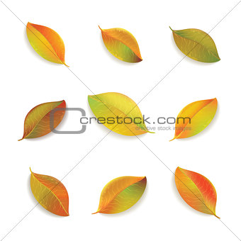 Autumn colorful leaves on white background.