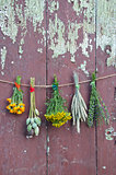 varions plants and medical herb bunch on old wall