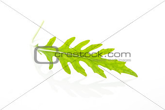 Arugula leaf isolated.