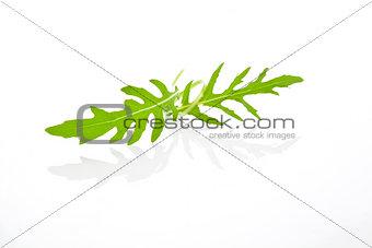 Arugula leaves isolated.