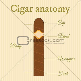 cigar structure1