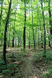 Famous forest park of Bratislava.