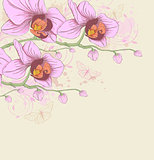 Pink orchids and butterflies