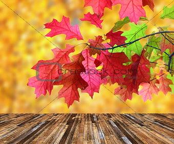 beautiful red leaves over veranda