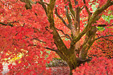 Beautiful Autumn Fall nature image landscape