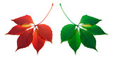 Red and green leafs