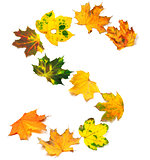 Letter S composed of autumn maple leafs