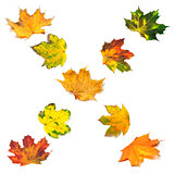 Letter X composed of autumn maple leafs