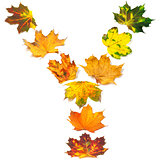 Letter Y composed of autumn maple leafs