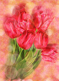 Tulips on Bokeh Background