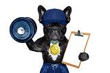 active sport dog