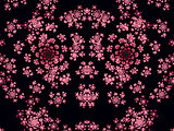 Beautiful Pink Fractal Flowers