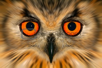 Enhanced owl portrait