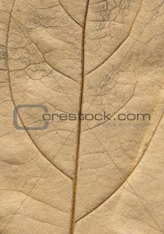 autumnal leaf macro-surface