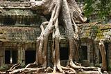 Ankor Wat being consumed