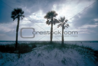 Three palm trees on beach with sunset in background