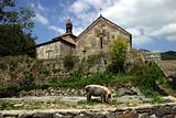 Haghbat church with a pig