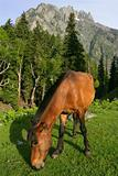 Horse grazing in the mountains 2