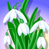 Snowdrops - Close-up