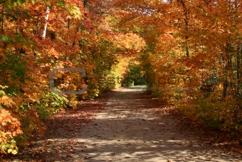 Fall Colors in the Muskokas