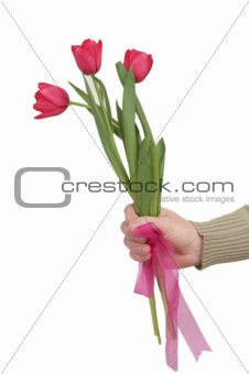 Three red tulips in man's hands