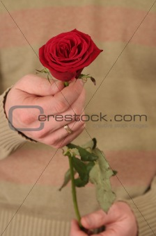 One red rose in a man's hand