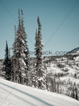 Alpine skiing slope