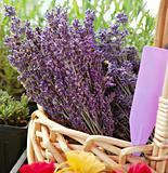 Lavender at Marketplace