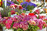 Flower Stall