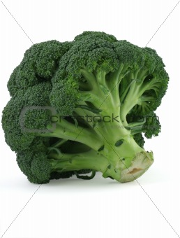 appetizing broccoli on white background
