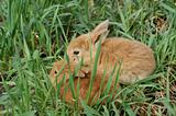 two small rabbits on the grass