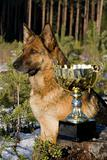 Germany Sheep-dog with cup