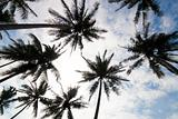 tropical palm trees low angle