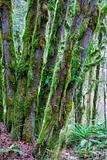Moss Covered Trees II