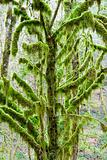 Tree Covered with Moss
