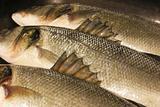 barbs of a sea bass